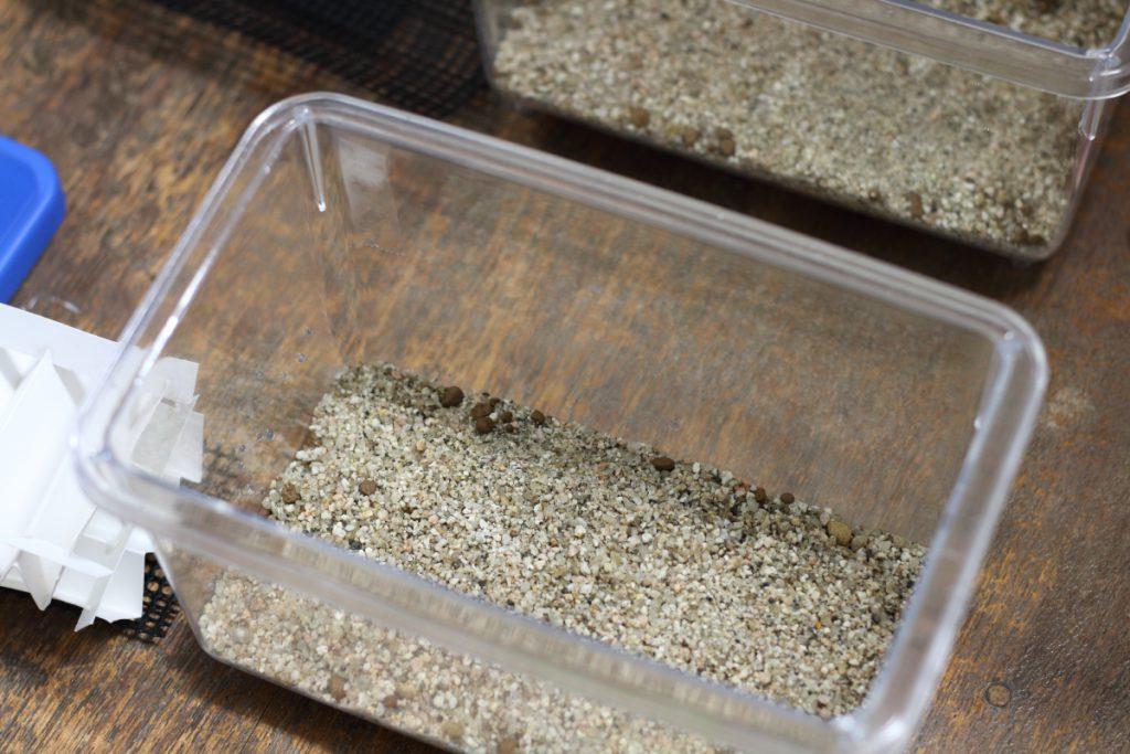 砂を敷き、乾燥具合を見る粒も投入