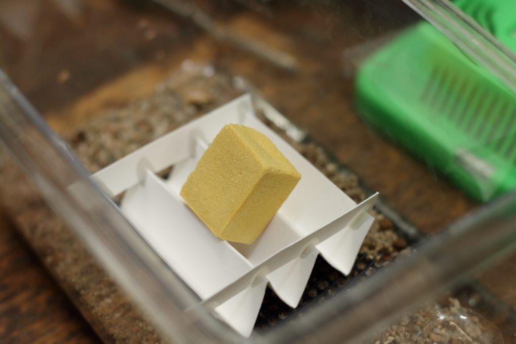 エサの高野豆腐もセット完了!